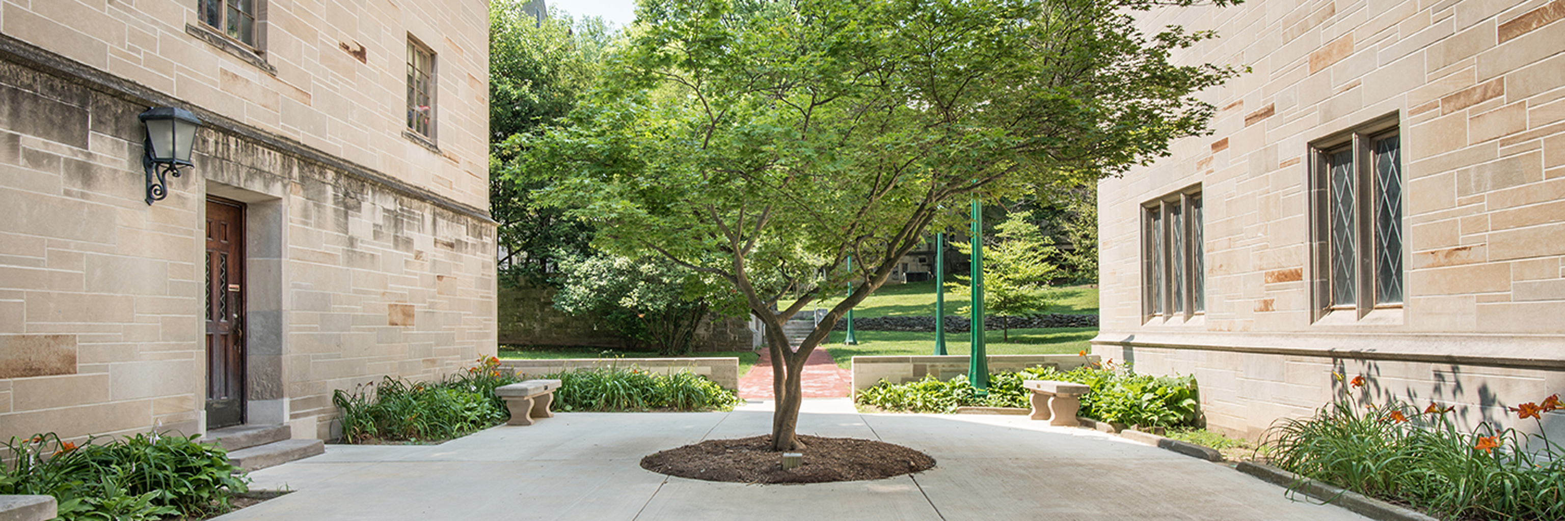 Tree growing in the courtyard by Sycamore Hall.